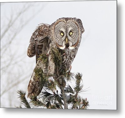 Metal Print featuring the photograph The Perching Prince by Heather King