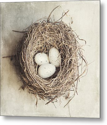 The Perfect Nest Metal Print by Lisa Russo