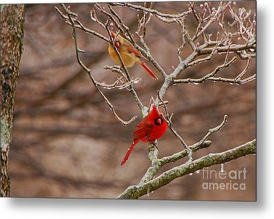 The Perfect Pair Metal Print by Mary Carol Story