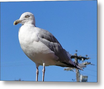 The Perfect Sea Gull  Metal Print