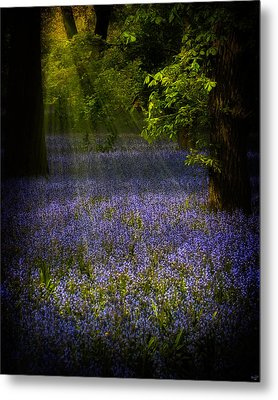 Metal Print featuring the photograph The Pixie's Bluebell Patch by Chris Lord