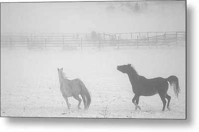 Metal Print featuring the photograph The Play Of Horses by Michael Dohnalek