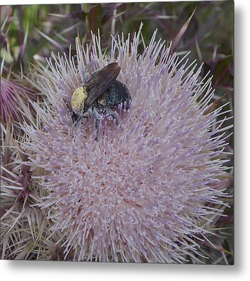 Metal Print featuring the photograph The Pollen Count Is High Today by John Glass