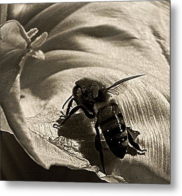 The Pollinator Metal Print by Chris Berry