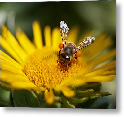 The Pollinator Metal Print by Rona Black