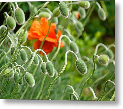 Metal Print featuring the photograph The Poppy by Evelyn Tambour