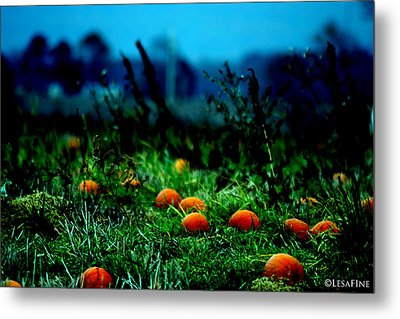 Metal Print featuring the photograph The Pumpkin Patch by Lesa Fine