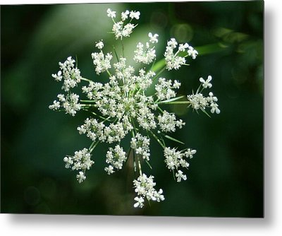 The Queen Of Lace Metal Print by Barbara S Nickerson