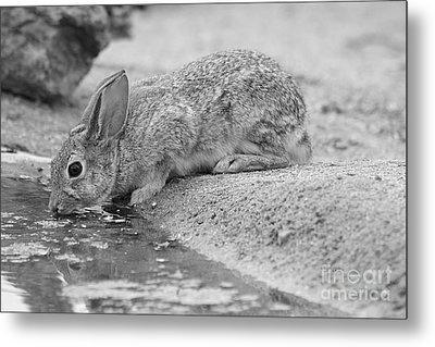 The Rabbit And The Water Metal Print by Ruth Jolly