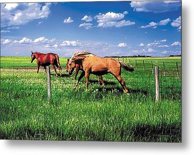 The Race Metal Print by Terry Reynoldson
