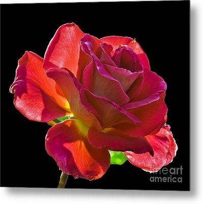 The Red One Metal Print by Robert Bales