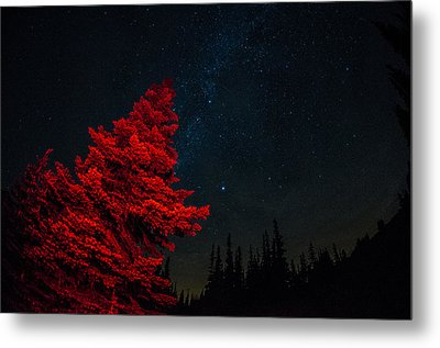 The Red Tree On A Starry Night Metal Print by Brian Xavier