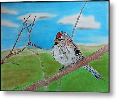 The Redpoll Metal Print