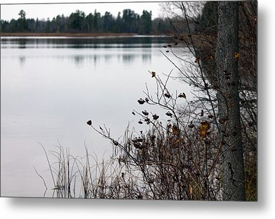 The Remnants Of Fall Metal Print by Rhonda Humphreys