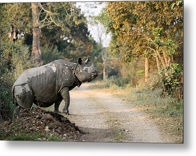 The Rhino At Kaziranga Metal Print by Fotosas Photography