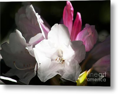 The Rhododendron Forest C Metal Print by Jennifer Apffel