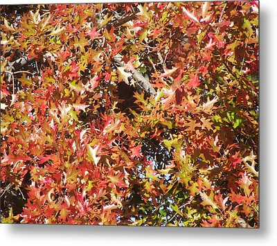 The Rich Reds And Yellows Of Fall Metal Print by James Rishel