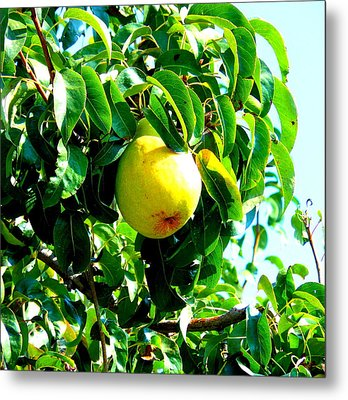 The Ripe Pear Metal Print by Kay Gilley
