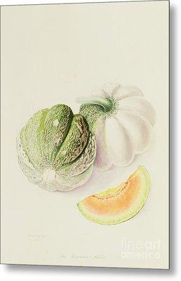 The Romana Melon Metal Print