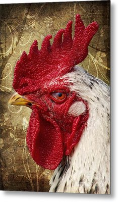 The Rooster Metal Print by Angela Doelling AD DESIGN Photo and PhotoArt