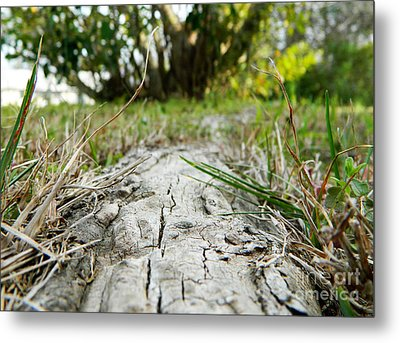 The Root Of Happiness Metal Print by Andrea Anderegg