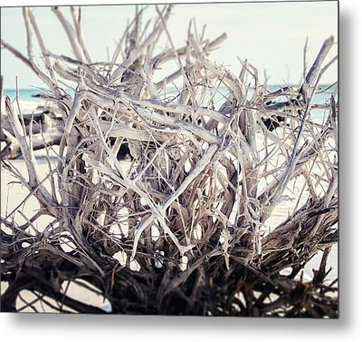 The Roots Metal Print