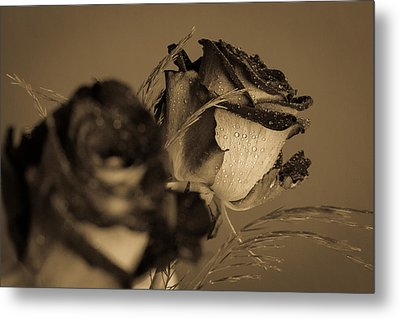 The Rose Metal Print by Andreas Levi