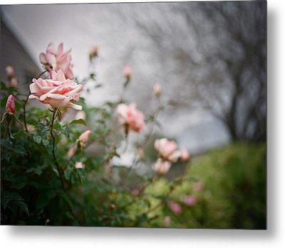 The Rose Garden Metal Print by Linda Unger