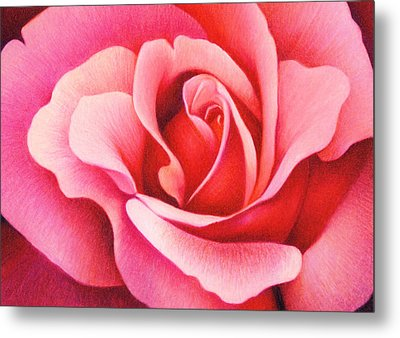 The Rose Metal Print by Natasha Denger