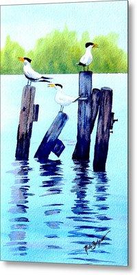 The Royal Terns Metal Print by Ruth Bodycott