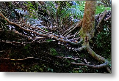 Metal Print featuring the photograph The Salamander Tree by Evelyn Tambour