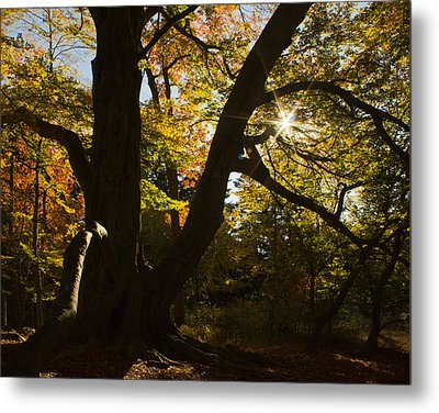 Metal Print featuring the photograph The Secret Forest by Jose Oquendo