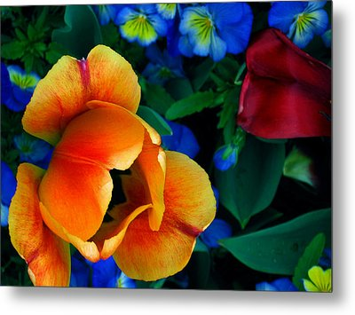 The Secret Life Of Tulips Metal Print by Rory Sagner