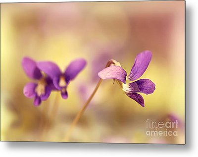 The Secret World Of Wild Violets Metal Print by Lois Bryan