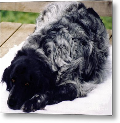The Shaggy Dog Named Shaddy Metal Print by Marian Cates