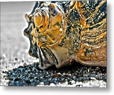 The Shell On The Sand Metal Print