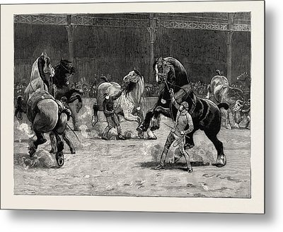The Shire Horse Show At The Agricultural Hall Metal Print