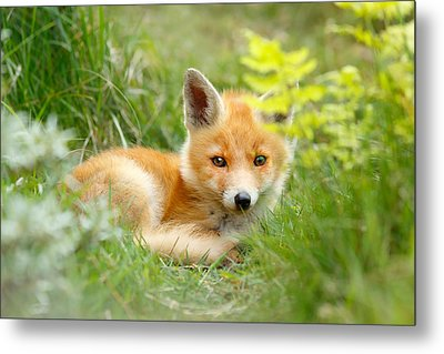 The Shy Kit Fox Cub Hiding Behind Some Ferns Metal Print by Roeselien Raimond