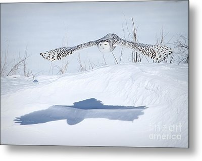 The Silent Hunter Metal Print by Heather King