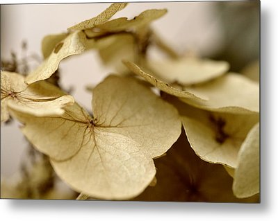 The Soft Whisper Of Petals Metal Print
