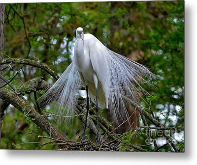 The Stare Down Metal Print by Kathy Baccari