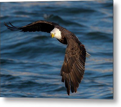 The Stare   Metal Print by Glenn Lawrence
