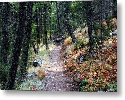 The Start... Metal Print by Michele Richter