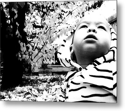 Metal Print featuring the photograph The Stoic Zebra  by Jessica Shelton
