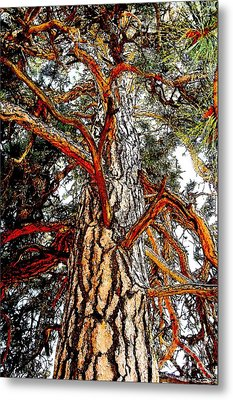 Metal Print featuring the photograph The Strong One by Joseph J Stevens