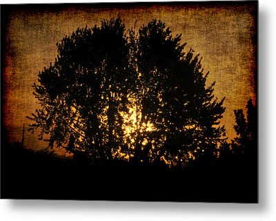 The Sun Behind The Tree Metal Print by Frederico Borges