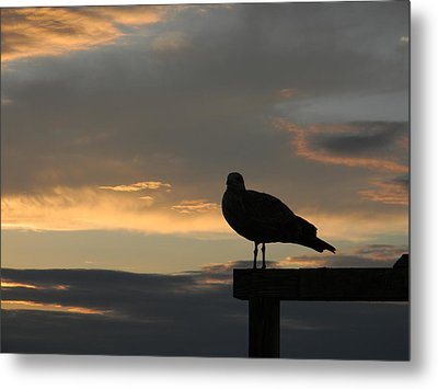 The Sunset Perch Metal Print by Jean Goodwin Brooks