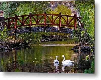 Metal Print featuring the photograph The Swans At Caughlin Ranch by Janis Knight
