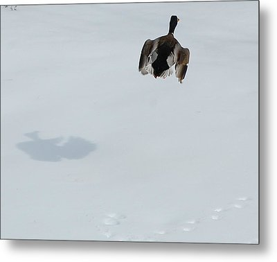 Metal Print featuring the photograph The Takeoff by Mim White
