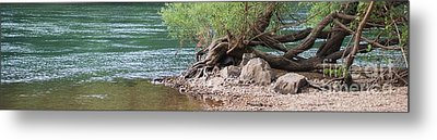 The Tangled Tree Metal Print by Julie Clements